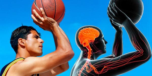 Nervesystemet og trening (del 3)