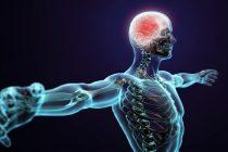 Nervesystemet og trening (del 1)